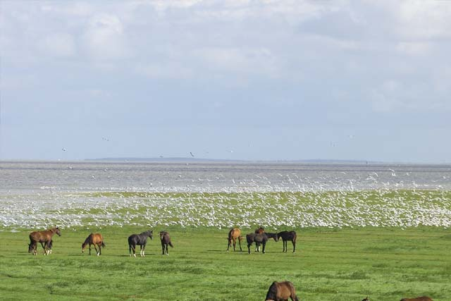 Het Friese landschap - Bnb Oosterpark Harlingen